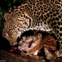 Night Meal by jaapv