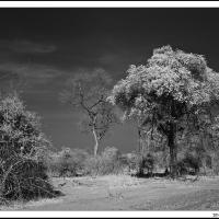 South Luanga In Ir by jaapv