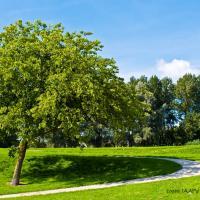 Tree by jaapv in Jaapv
