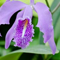 Orchid by Don Hutton in Regular Member Gallery