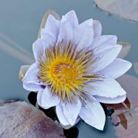 Lily by Don Hutton in Regular Member Gallery