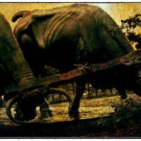 Beasts Of Burden - Montevideo by woodmancy