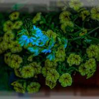 Digital Flowers- Fuji 55-1.81 Of 1 by woodmancy