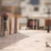 Dog And Masteroriginal Image by woodmancy