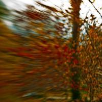 Fall 26 by woodmancy
