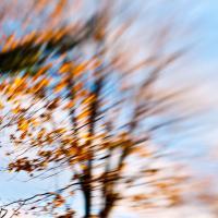 Fall Blow by woodmancy