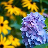 Fall Flowers by woodmancy