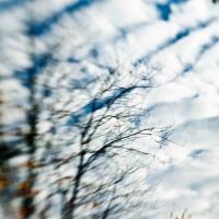 Fall Tree 50 by woodmancy