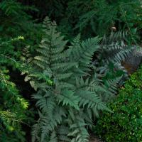 Fern With Dr Mode1 Of 1 by woodmancy