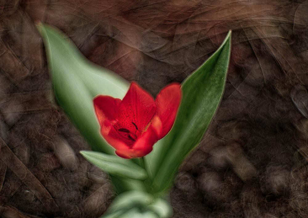 Flower With Ground Bokeh by woodmancy in Regular Member Gallery