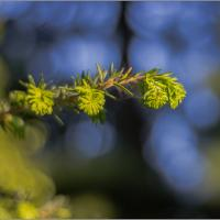 Gh-2 With Fujian 35-1.7 - Fir Frond by woodmancy