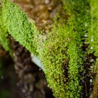 Green Stream by woodmancy