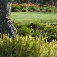 Gxrp10 - Terranea Tree With Grass And Flowers by woodmancy