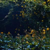 Isco 50-1.9 - Gairloch Gardens-8 by woodmancy