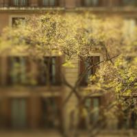 Nex 5n With Pentax 50-1.4 And Tilt - Barcelona by woodmancy