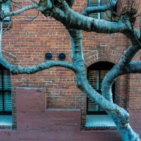 Nikon 1 V2 San Francisco Wall And Tree  1 Of 2 by woodmancy