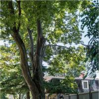 Pentax K01 21mm Da Tall Oak Tree by woodmancy