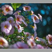 Pink Flower Cz Tv Lens1 Of 1 -2 by woodmancy