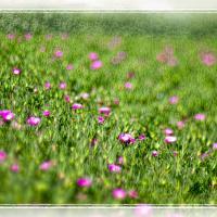 Red Flowers - Almeria by woodmancy