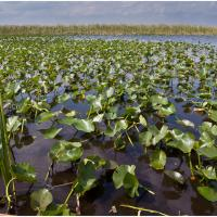 Ricoh Gx-200 Everglades by woodmancy