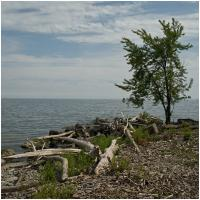 Ricoh Gxr A12 28 Tree And Lake by woodmancy