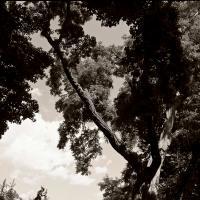 Ricoh Gxr P10 - Trees Oakville-2 by woodmancy in woodmancy