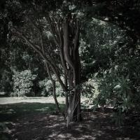 Ricoh Gxrp10 Gairloch Garden Tree by woodmancy