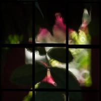 Sigma 400mm Mirror - 3 X 3 Window On Roses by woodmancy