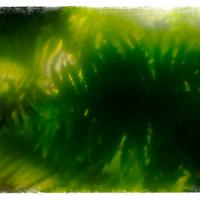 Sima 100mm F2soft Focus - Fern Garden1 Of 1 by woodmancy
