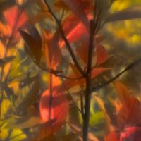 Sima Soft Focus - Red Green Yellow1 Of 1 by woodmancy