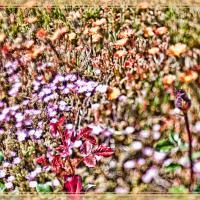 Tangled Garden - Asmeria