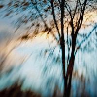 Tree At Sunset - Fall by woodmancy