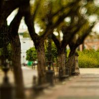Trees Cadiz 27 by woodmancy