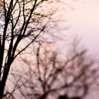 Trees Near Pool - 28mm-3.5 - Square  by woodmancy