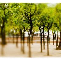 Treescadiz by woodmancy