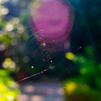 Web 1 by woodmancy