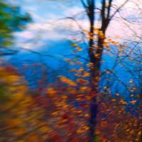 Windy Canadian Fall by woodmancy in woodmancy
