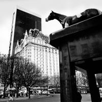 Horses Rule, Nyc by fotografz in fotografz
