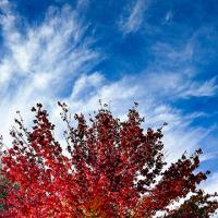 autumn tree 002465w by PSon