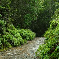 Jungle Path by Lisa in Regular Member Gallery