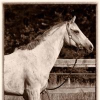 Half Human Half Horse by Georg Baumann