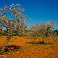 Mallorca 2012 03 by fotoingo in Regular Member Gallery