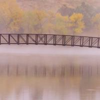 Morning Fog by Shelby Frisch