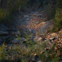 Dry Streambed by Shelby Frisch in Shelby Frisch