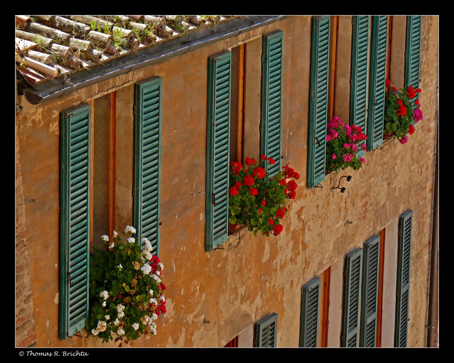 Siena Afternoon