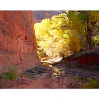 Canyon Reflections by cs750 in Regular Member Gallery