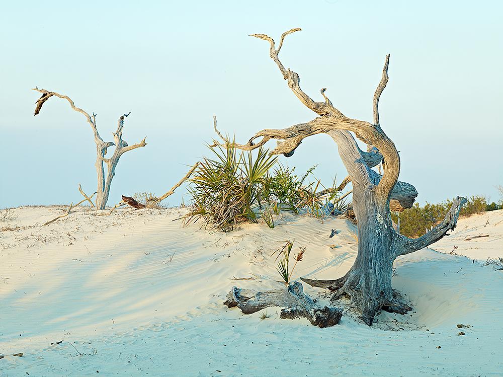 Sand Dune Ballet by cs750 in Regular Member Gallery
