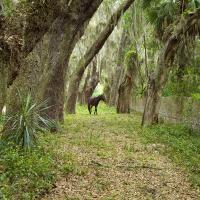Cumberland Island Stallion by cs750