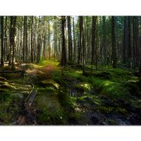 New Hampshire Woods & Moss by cs750 in Regular Member Gallery