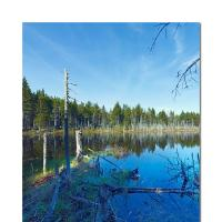New Hampshire Blue by cs750 in Regular Member Gallery
